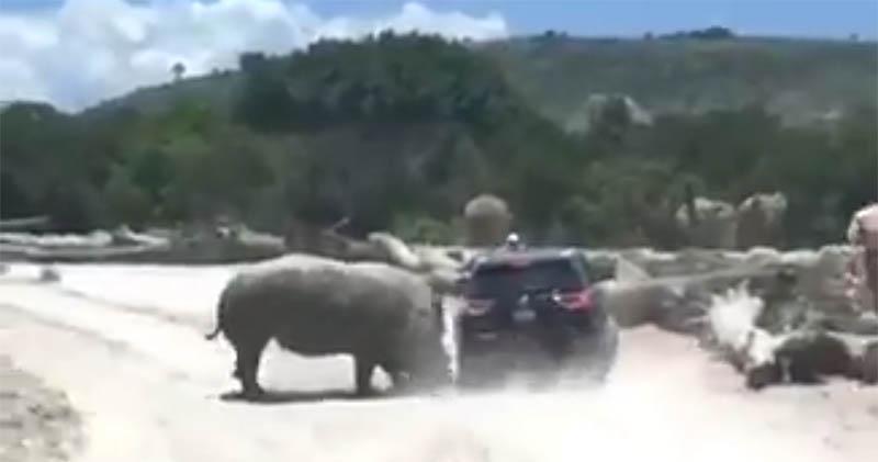 Rinoceronte embiste a familia en Africam Safari