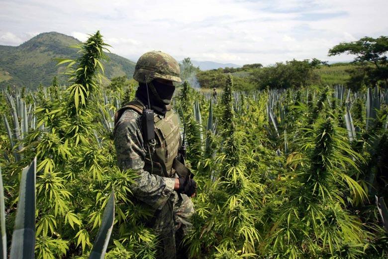 """Legalizar la droga enviaría un terrible mensaje a México"""