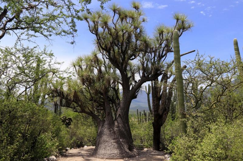 Por cultura y naturaleza, Valle de Tehuacán es «Bien Mixto» por la Unesco