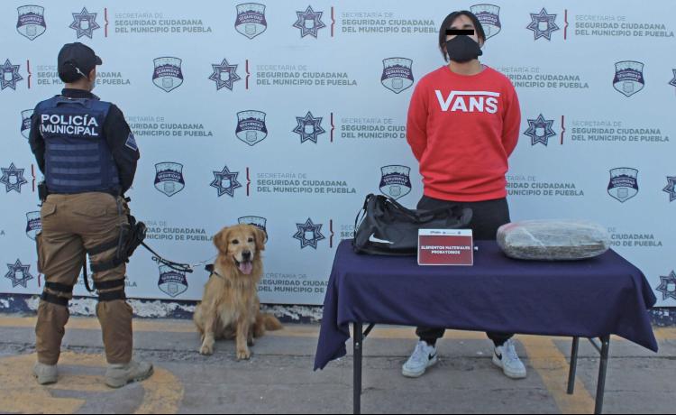 Asegura Policía Municipal de Puebla alrededor de cuatro kilogramos de marihuana; hay un detenido